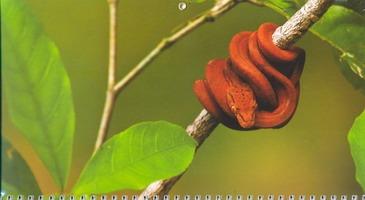 Календарь-2013(кв.тр)Змея 01.5.8 с картинками