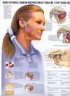 Височно-нижнечелюстной сустав(ВНС). Нарушения зубов и челюстей