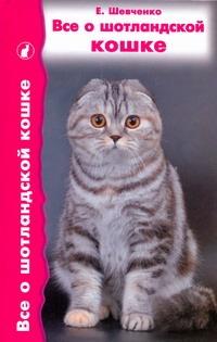 Все о шотландской кошке