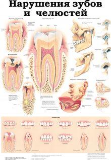 Нарушения зубов и челюстей. Височно-нижнечелюстной сустав
