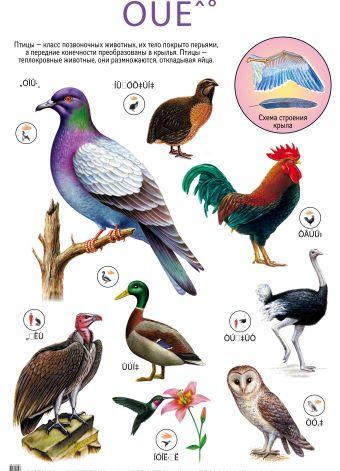 Птицы. Дикие животные Африки
