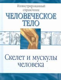 Скелет и мускулы человека