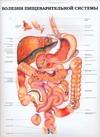 Болезни пищеварительной системы.Болезни мочевых органов