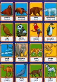Животные. Memory. Английские слова