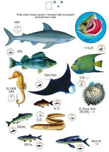 Насекомые. Рыбы