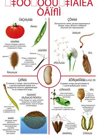 Опыление. Распространение семян