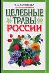 Целебные травы России